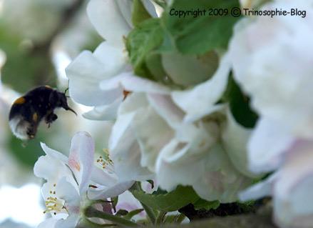 Frühlingstreiben © Kô-Sen