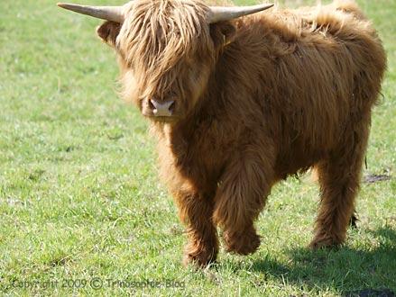 Gott wie eine Kuh ansehen © Kô-Sen/Trinosophie-Blog