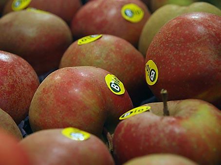 Wenn der Mensch sich plötzlich als Apfel am Baum wiederfinden würde?Bild: Heinz Knotek